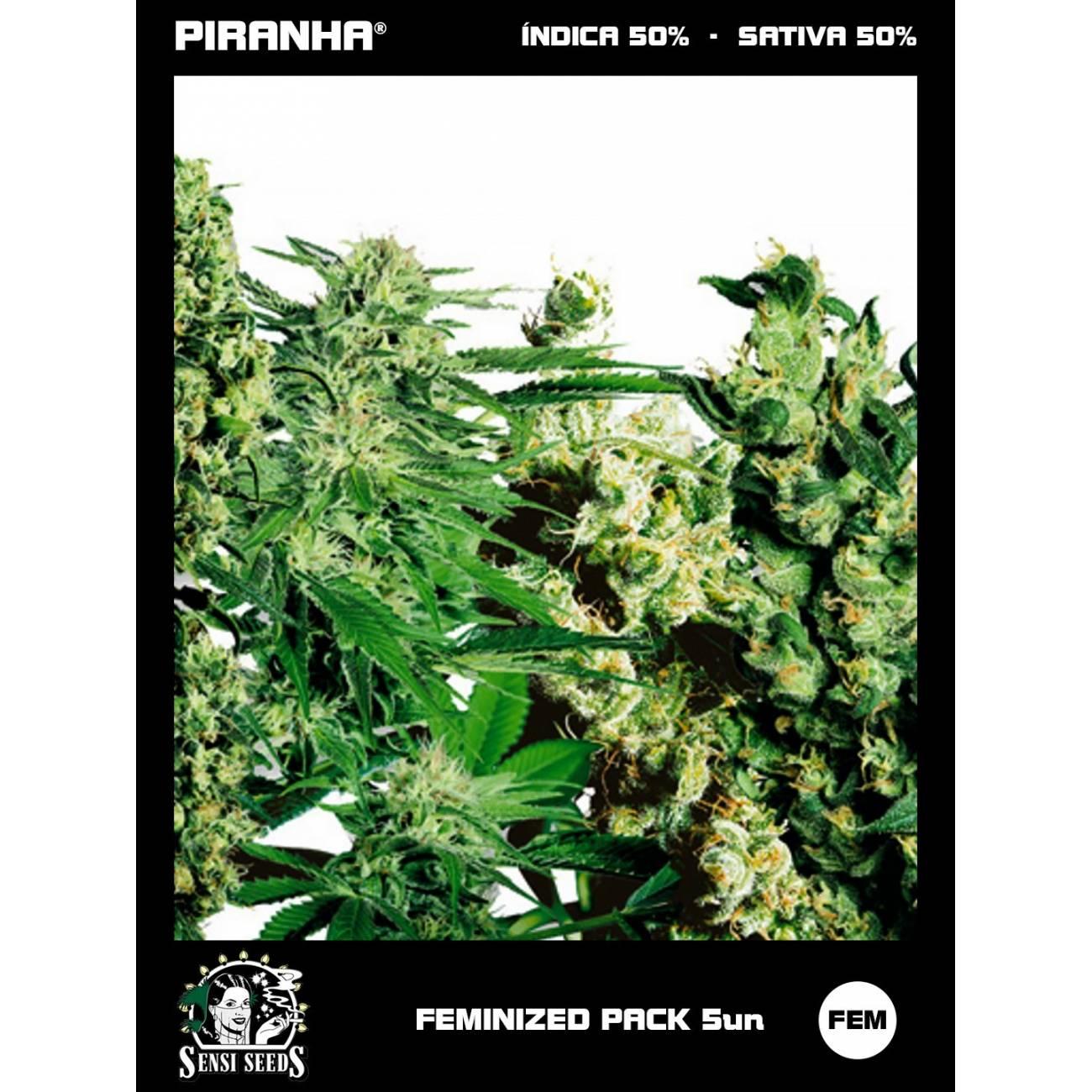 Feminized Mix Pack (5u)