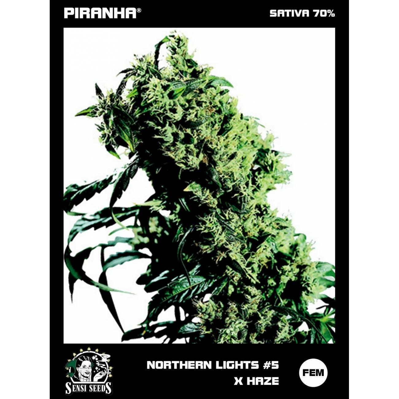 Northern Lights No5 x Haze (3u)