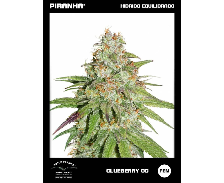 Glueberry O.G. (3u)