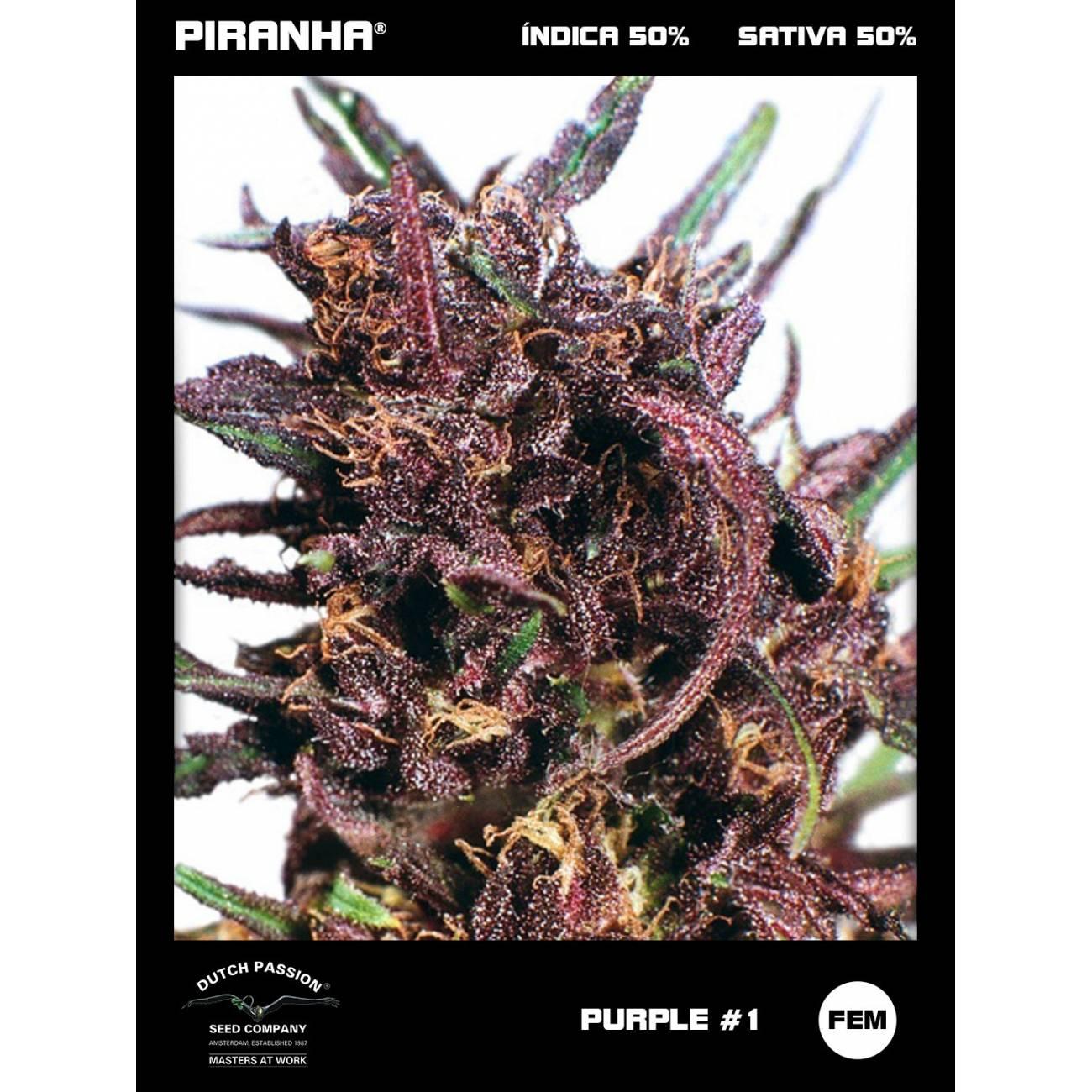 Purple N1 (3u)
