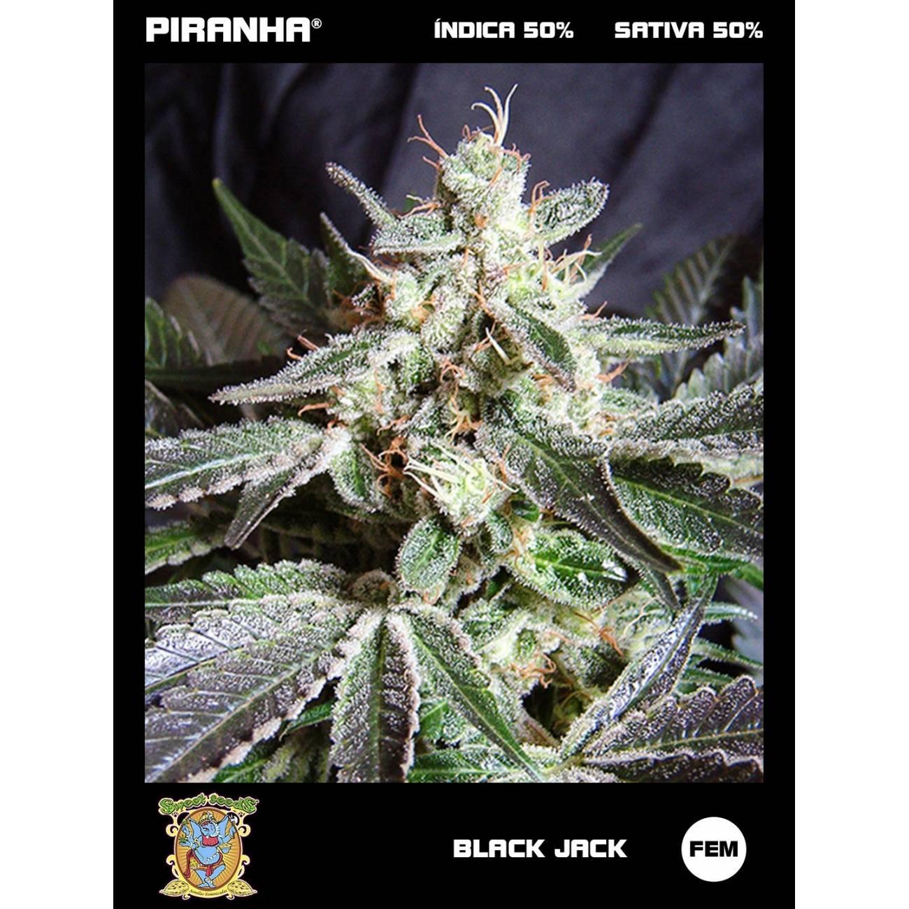 Black Jack (3+1u)