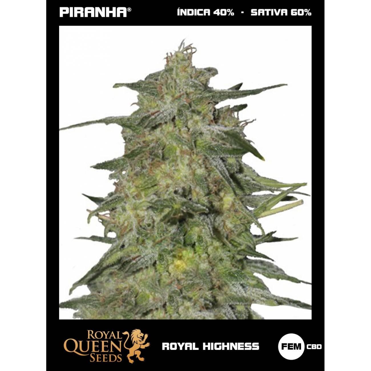 Royal Highness CBD (1u)